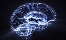Mira algunas curiosidades sobre el cerebro humano.