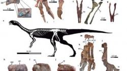 El Chilesaurio, asombroso dinosaurio herbívoro del sur de Chile.