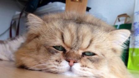 Gatos ancianos pueden sufrir convulsiones con algunos sonidos.