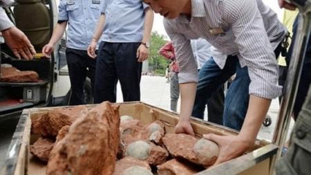 Hallan 43 huevos fosilizados en la «ciudad de los dinosaurios» de China.