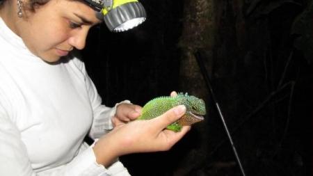 Ecuador y Perú hallan 'Godzillas' en miniatura.