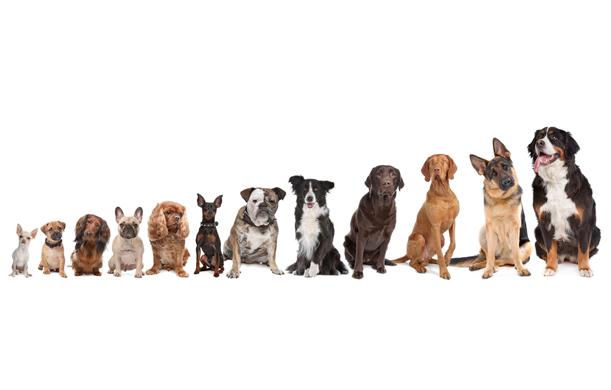 6 consejos para mantener a tu perro bien alimentado.