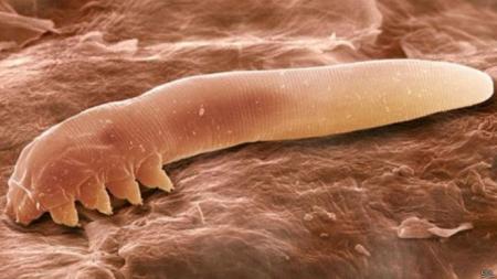 ¿Sabía usted que su cara alberga importantes cantidades de ácaros?