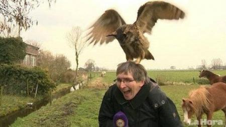 Un búho holandés que aterriza sobre la cabeza de la gente.