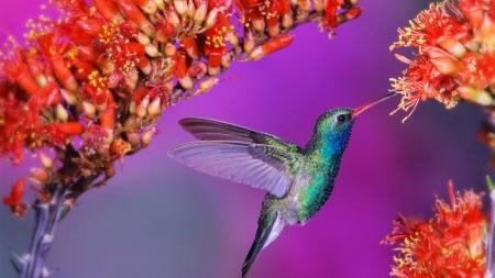 Foto de colibrí tomada en Costa Rica destaca en diario británico.