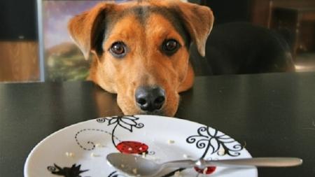 Una empresa lanza comida de perros para microondas.