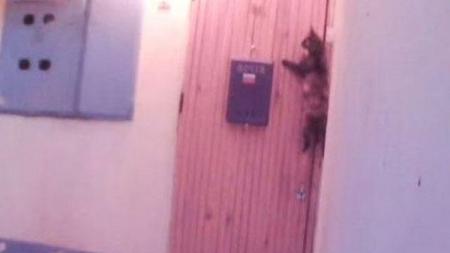 Gato toca el timbre para que su dueño lo deje entrar a casa.