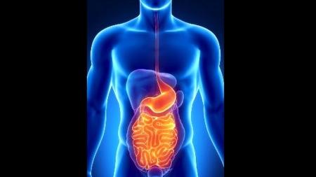 6 razones de por qué el ejercicio mejora tu digestión.