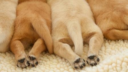 Curiosidades sobre las patas del perro.