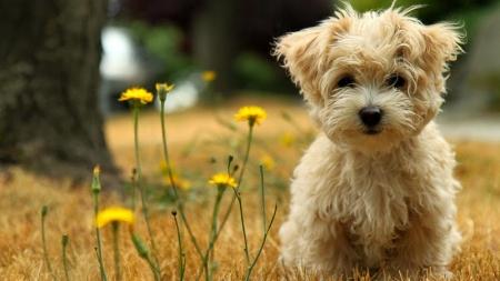 ¿Sabe por qué usted se derrite ante la dulce mirada de un cachorrito?