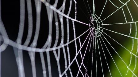 Araña ronronea para atraer a las hembras.