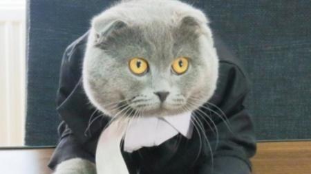 Un gato se convierte en director de una empresa en Rumania.
