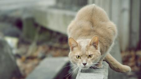 Gatos y humanos, ¿quién tiene el control?