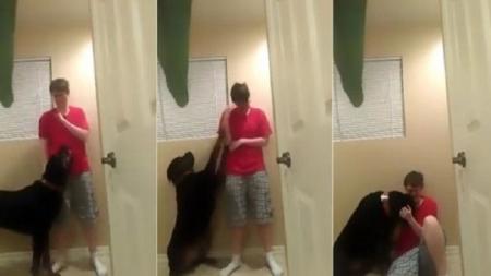 Perro rottweiller detiene crisis de mujer con síndrome de Asperger.