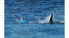 Surfista logra escapar de un ataque de tiburón