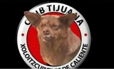 LA HISTORIA DETRÁS DEL MEME: EL PERRO CHILAQUIL