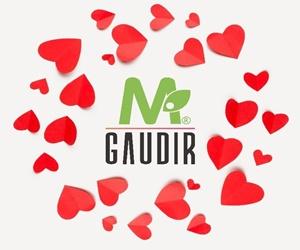 GAUDIR300X250