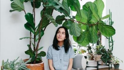 Plantas que según el Feng Shui no debes tener en tu hogar, atraen problemas.