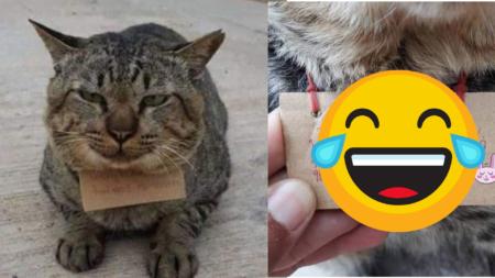 Gatito se va de pinta 3 días y regresa endeudado