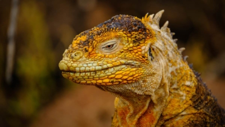 Cerebro reptiliano: ¿tenemos realmente esta estructura ancestral?